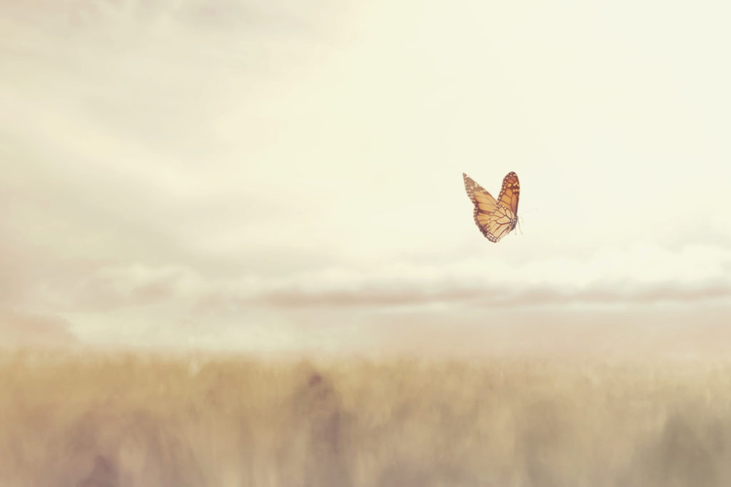 Butterfly soars over the meadow. Dreams of new beginnings